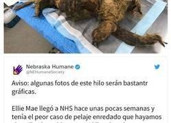 Enlace a Esta perra no podía ni moverse a causa de su pelaje extremadamente enredado, pero consiguieron salvar su vida