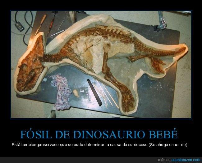 bebé,dinosaurio,fósil