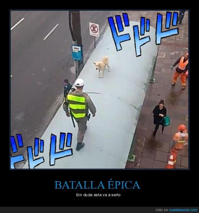 parada de autobús,perro,techo,wtf