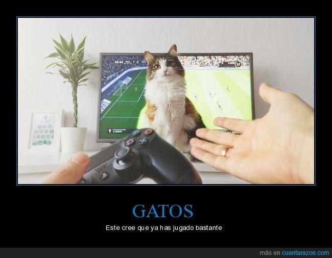 gatos,interrumpiendo,jugando