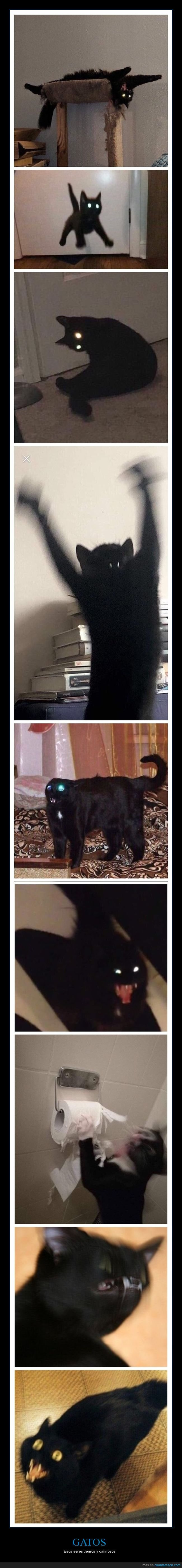 gatos,wtf