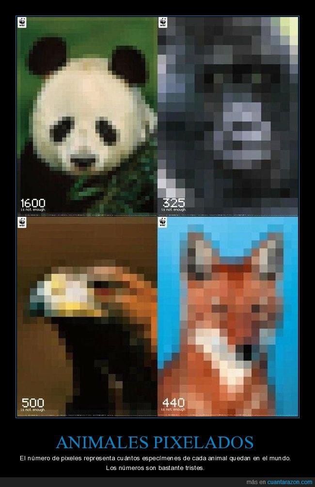 animales,extinción,pixelados,píxeles