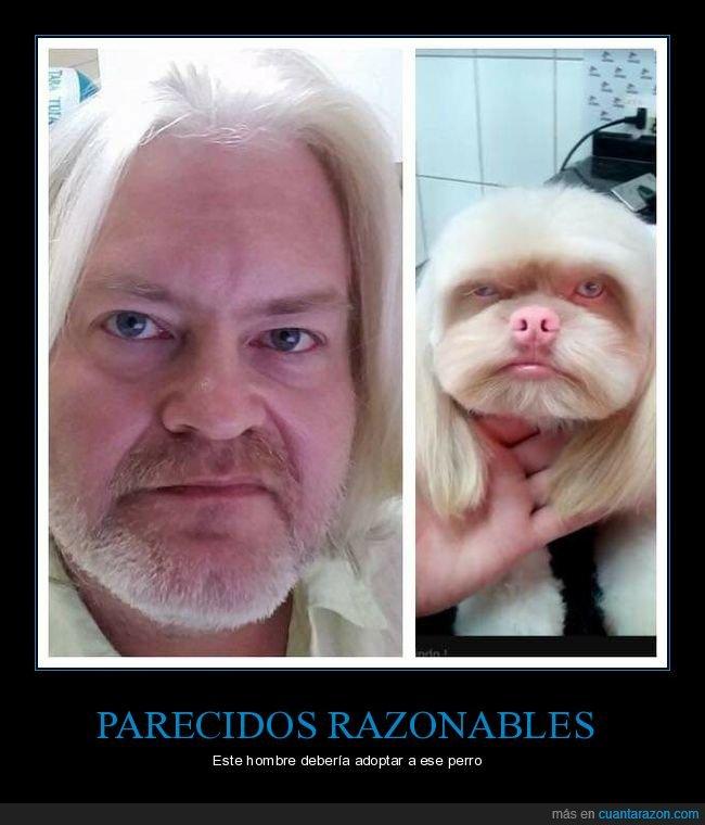 parecidos,pelo,perros