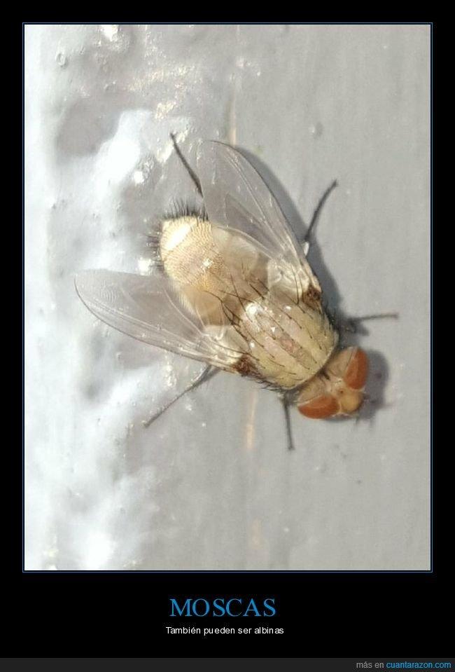 albina,mosca,wtf