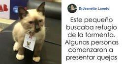 Enlace a La gente comenzó a presentar quejas sobre un gatito callejero que se coló en un despacho de abogados, así que lo contrataron