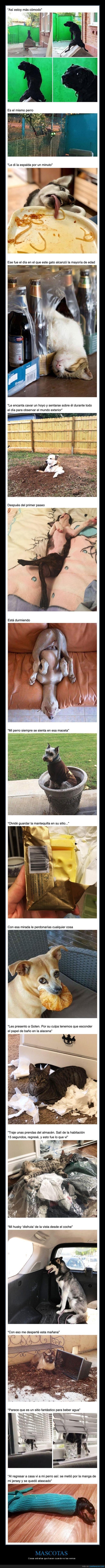 animales,cosas extrañas,mascotas