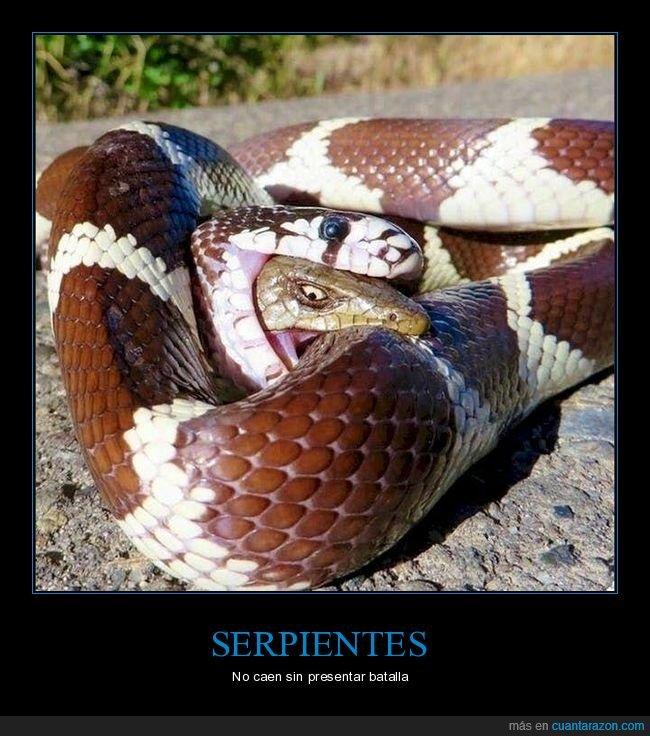 comiendo,mordiendo,serpientes