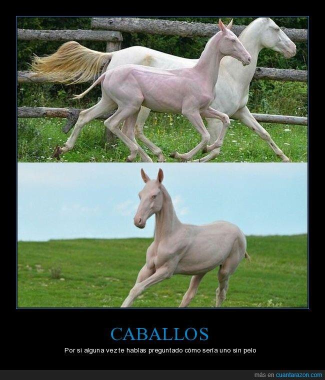 caballo,sin pelo,wtf