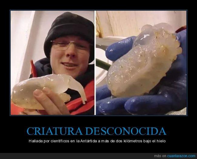 antártida,criatura,desconocida