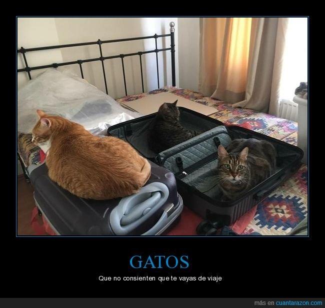 gatos,maletas,viaje