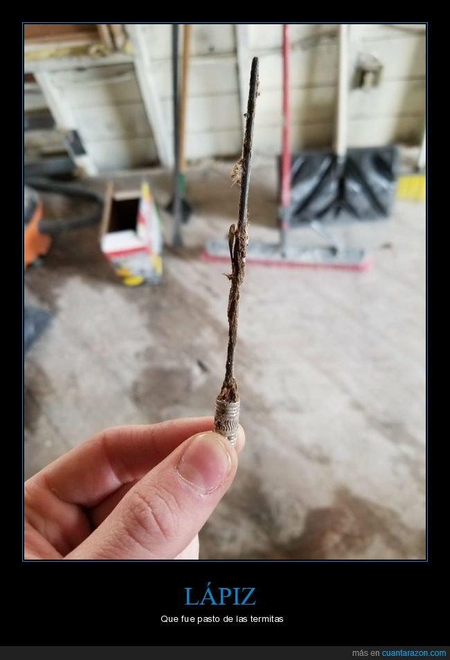 lápiz,termitas