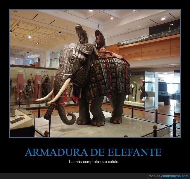 armadura,completa,elefante