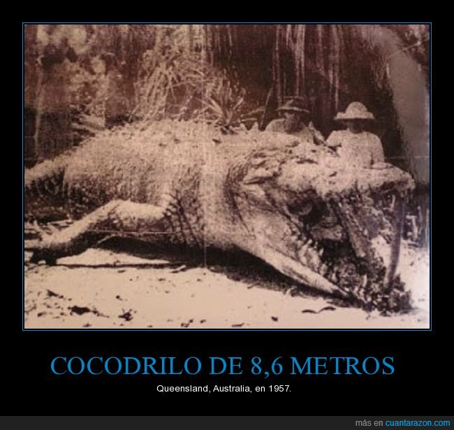 australia,cocodrilo,gigante,retro