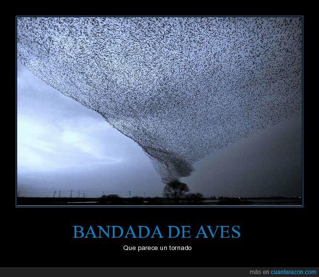 aves,bandada,parecidos,tornado