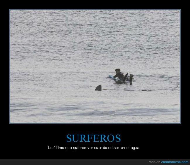 aleta,mar,surfero,wtf