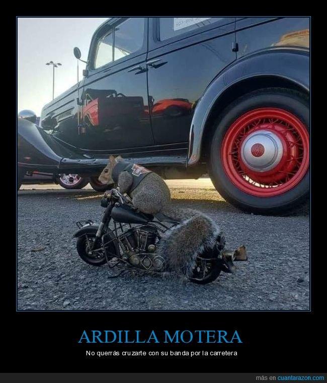 ardilla,harley,motera,moto