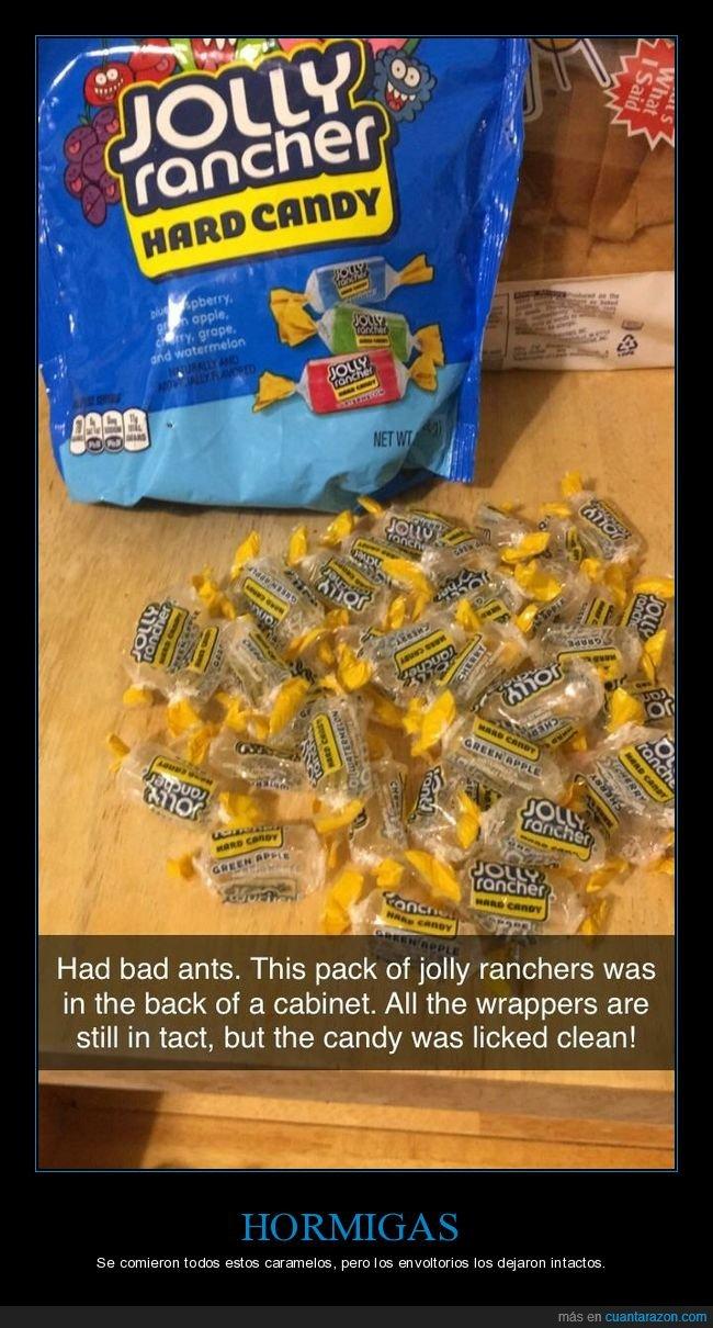 caramelos,comerse,envoltorios,hormigas