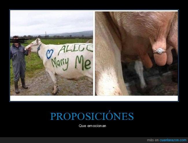 anillo,proposición,ubre,vaca,wtf