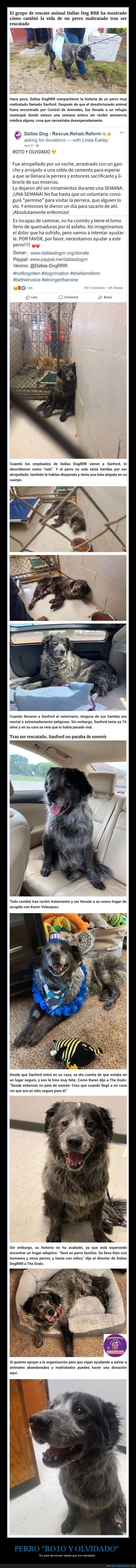 olvidado,perro,rescatado