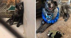 """Enlace a Este perro """"roto y olvidado"""" no para de sonreír desde que fue rescatado"""