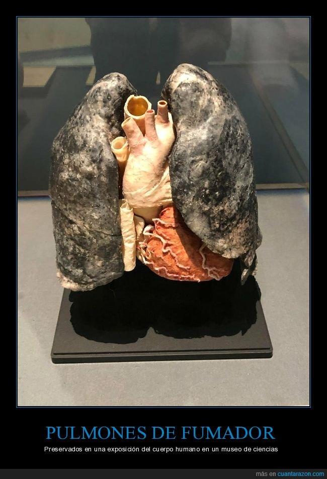 fumador,pulmones