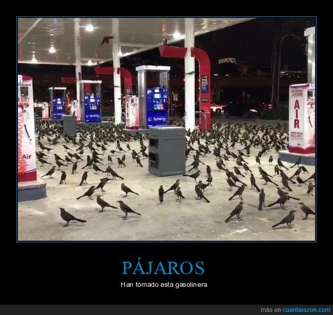 gasolinera,pájaros,wtf