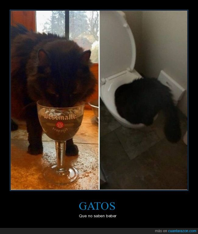 bebiendo,gatos,váter