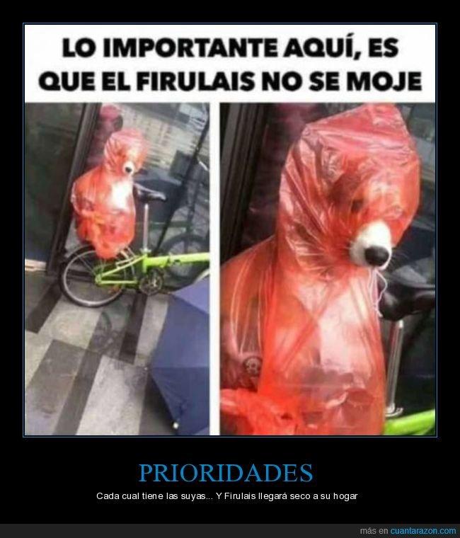 chubasquero,mojarse,perro