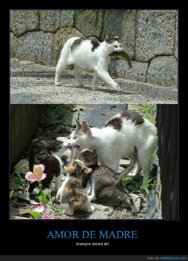 comida,gatos,madre,pescado