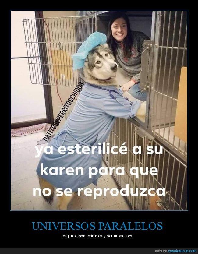 absurdo,esterilizar,perro