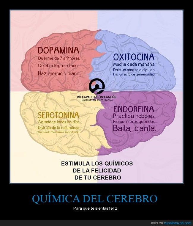 cerebro,dopamina,endorfina,oxitocina,química,serotonina