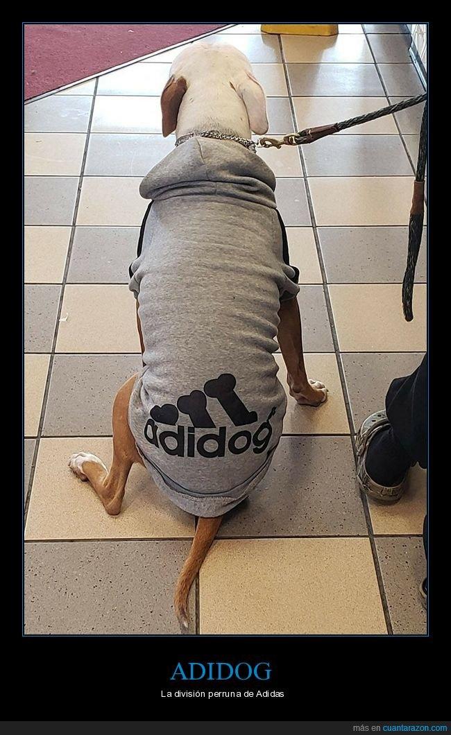 adidas,adidog,perros