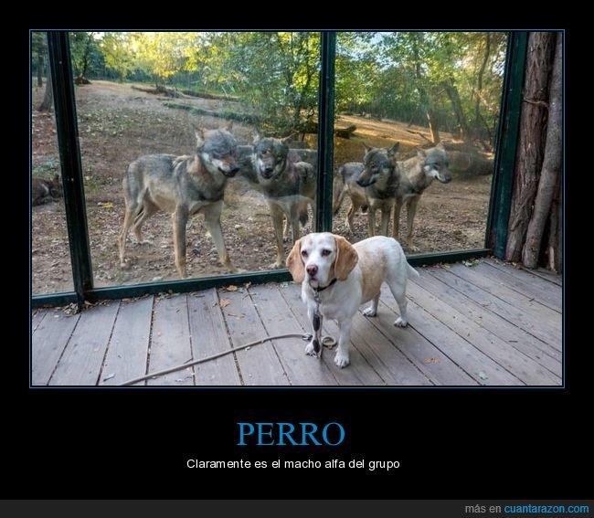 lobos,perros,zoo