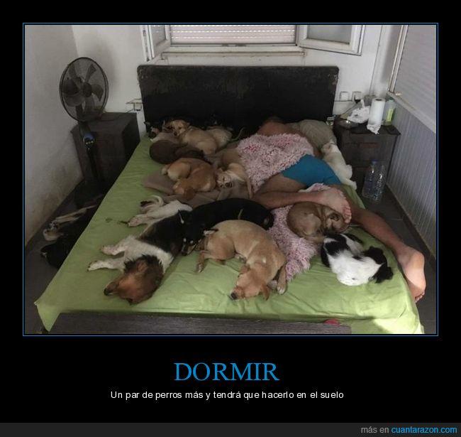 cama,durmiendo,perros