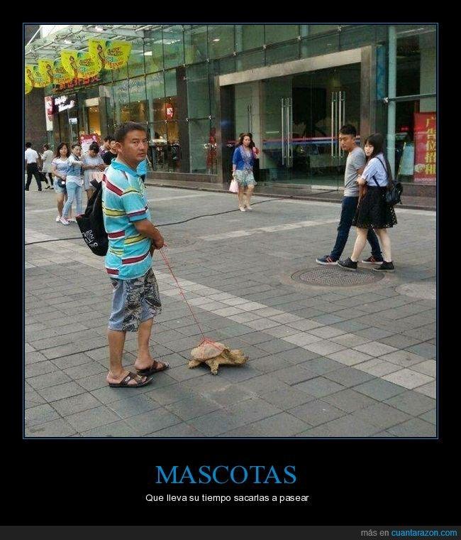 correa,mascota,tortuga