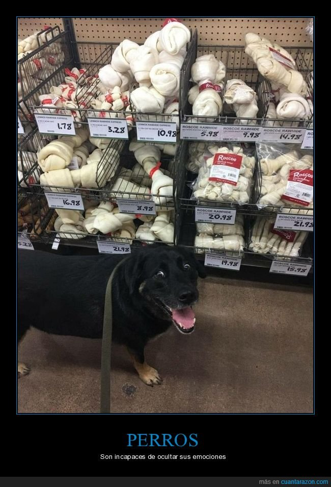 cara,perros,tienda