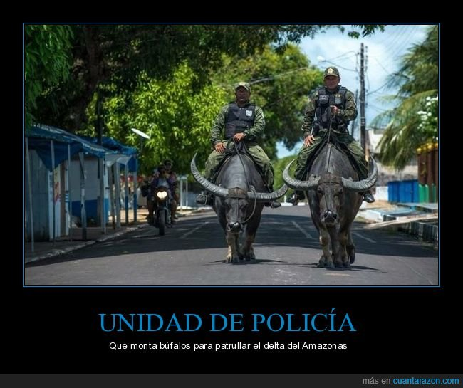 búfal0s,policía,wtf