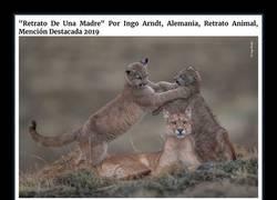 """Enlace a Las mejores fotos de vida salvaje del """"wild life photographer of the year 2019"""""""