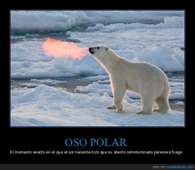 aliento,fuego,oso polar