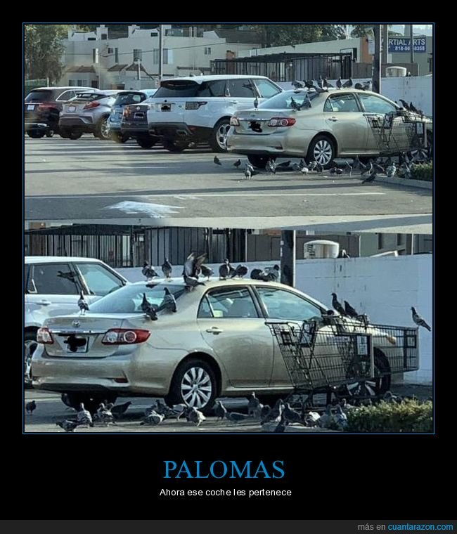 coche,palomas,wtf