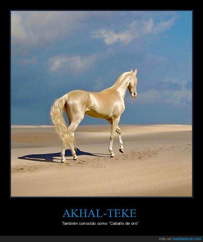 akhal-teke,caballo,oro
