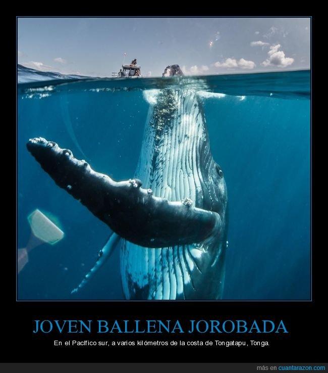 ballena,fotografía,mar