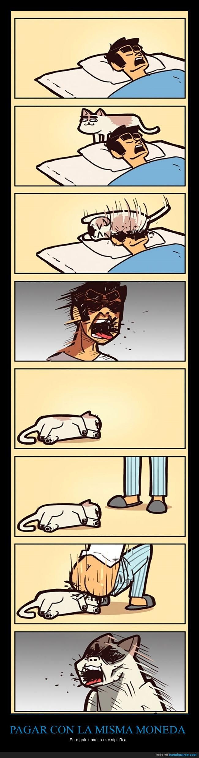 durmiendo,gatos,venganza