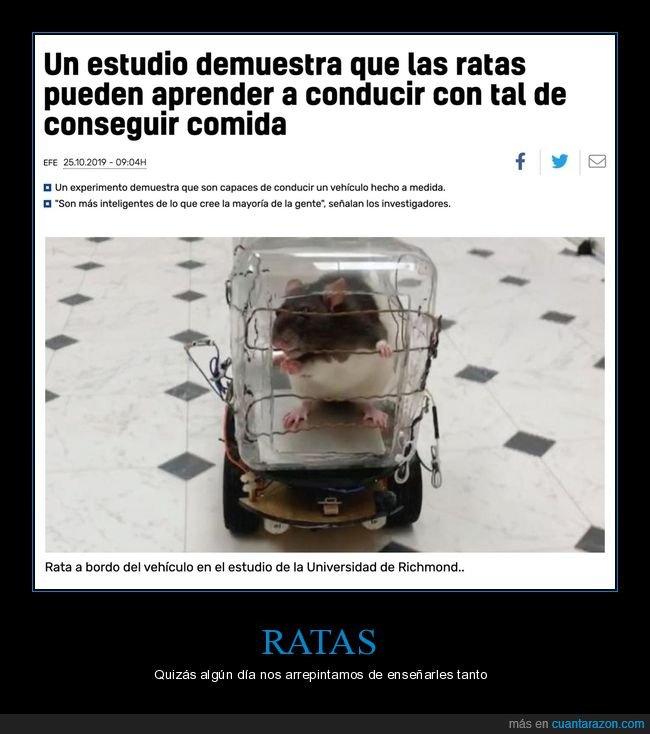 comida,conducir,estudio,ratas