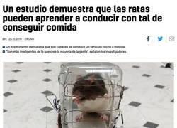 Enlace a Lo que puede conseguir una rata motivada...