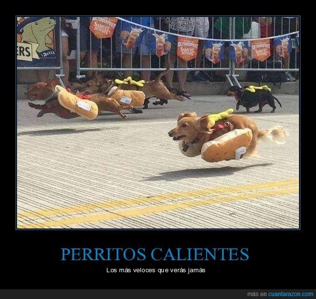 carrera,hot dogs,perros