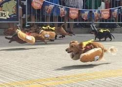 Enlace a Marchando unos hot dogs
