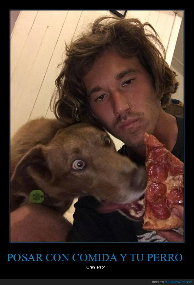 momento exacto,perros,pizza