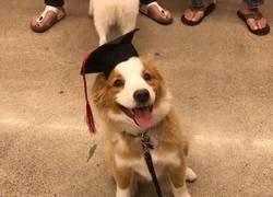 Enlace a El graduado