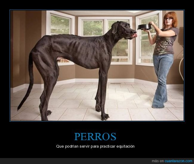 gigante,perros